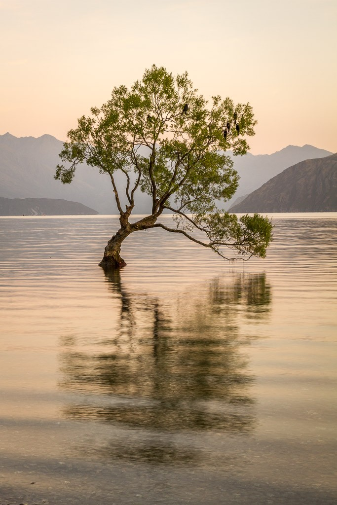 That Wanaka tree • Adventures with Paul